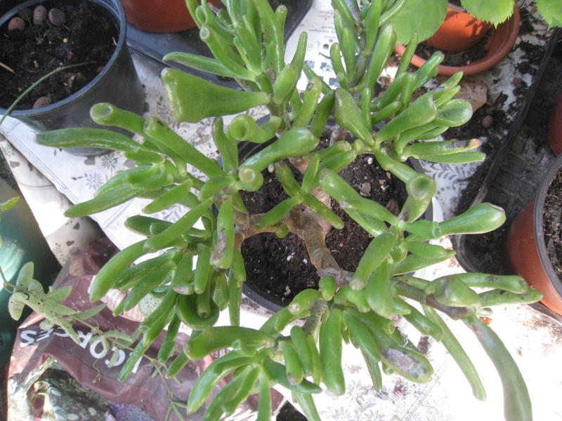 succulentes 01011