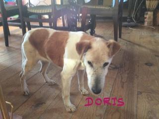 Doris ( the bin bag girl)  15_dor11
