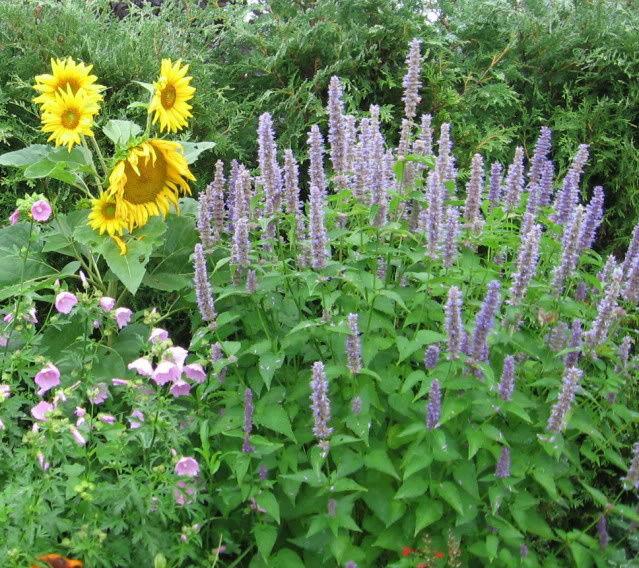 Guide d'identification: jeunes pousses, feuillages et fleurs Agas410