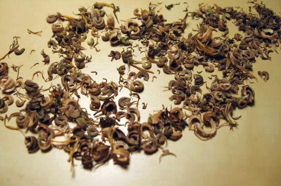 Récolte des semences, plante par plante Captur18