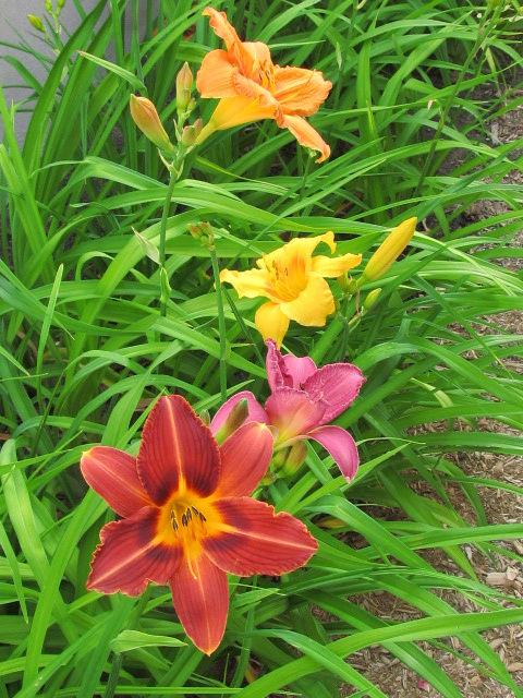 Guide d'identification: jeunes pousses, feuillages et fleurs Hem310