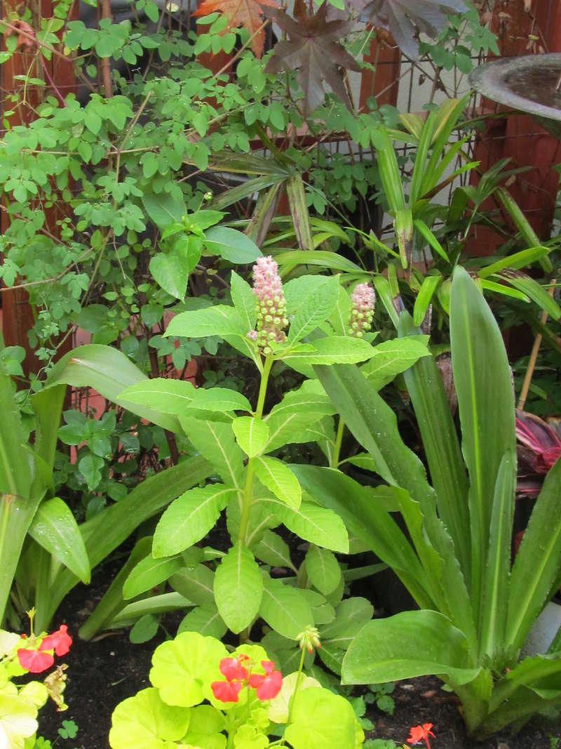 Liste des plantes aux Introuvables ( Mr Carrier )  Img_9111