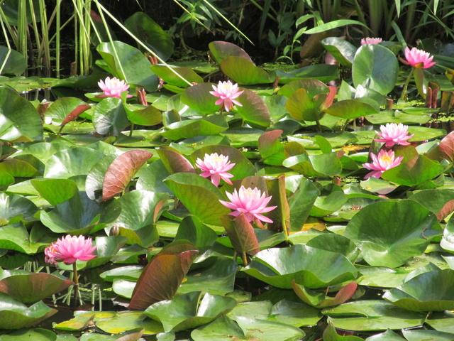 Liste des plantes aux Introuvables ( Mr Carrier )  Img_9210