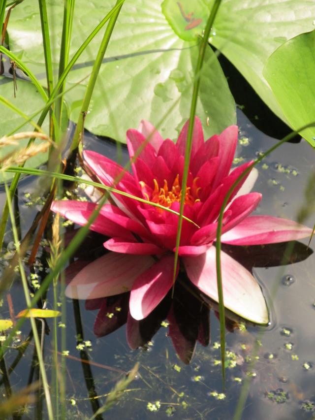 Liste des plantes aux Introuvables ( Mr Carrier )  Img_9212