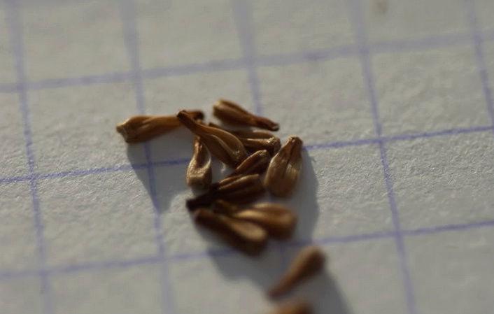 Récolte des semences, plante par plante - Page 4 Stok411