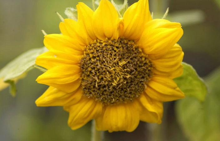Récolte des semences, plante par plante - Page 4 Tourne10