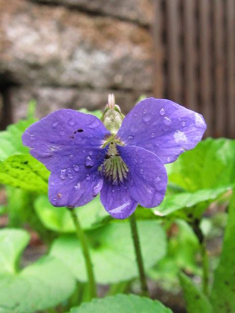 Guide d'identification: jeunes pousses, feuillages et fleurs V310