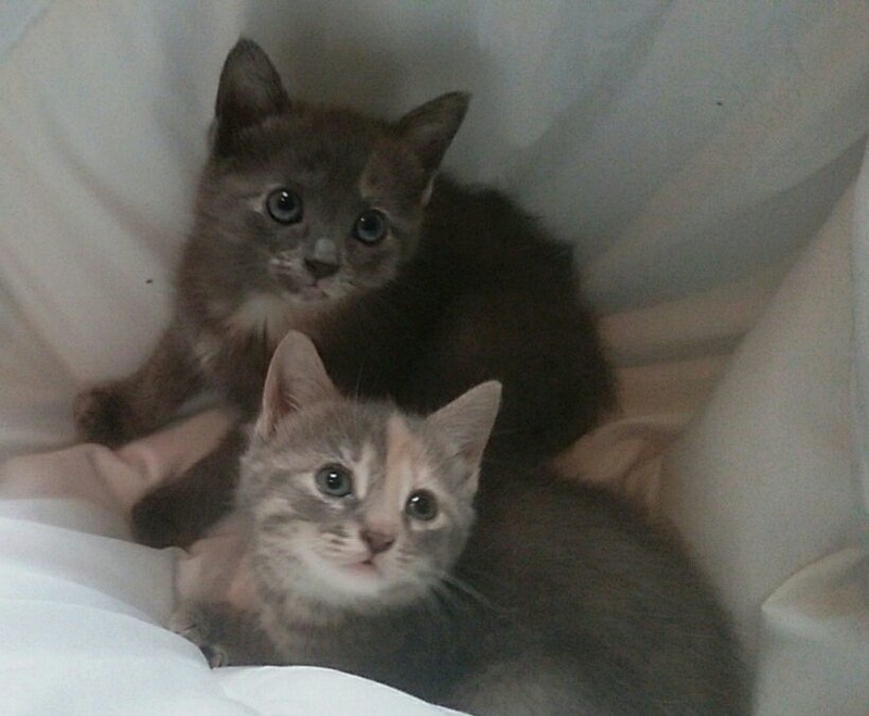 PEACH AND TIGER  ADOPTED  20264710