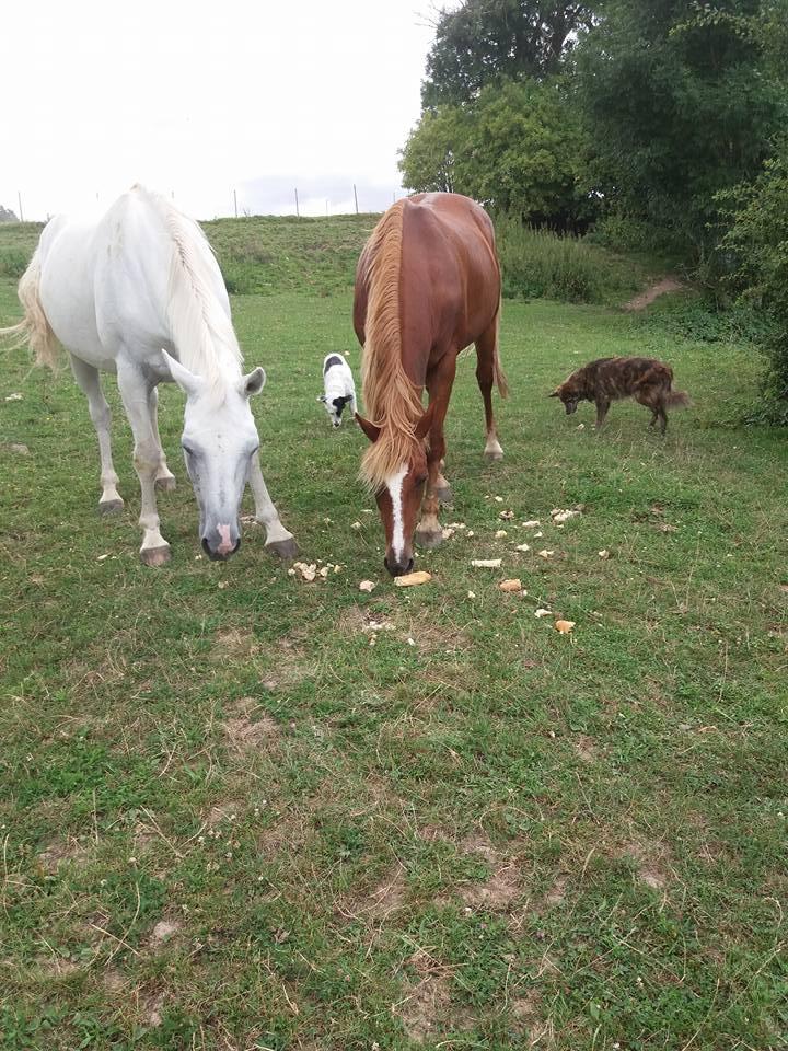 OVNI, mâle, né en mai/juin 2016 - REMEMBER ME LAND - adopté par Audrey (depart51) - Page 3 14600910