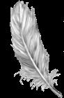 Las plumas de colores y otras señales angelicales. Pluma_15