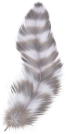 Las plumas de colores y otras señales angelicales. Pluma_22