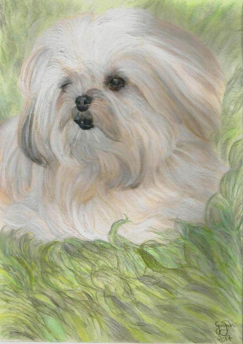 Portraits animalier et quelques dessins personnels - Page 4 Scan0010