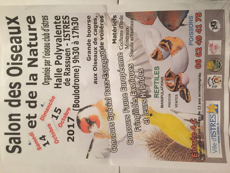 Salon de l'oiseaux   35a84410