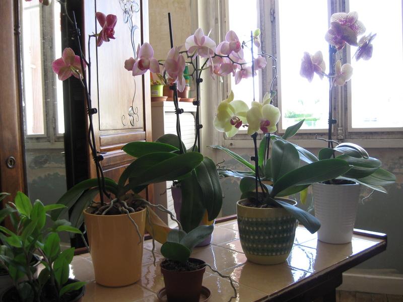 Floraisons d'intérieur  - Page 6 Mes_or10