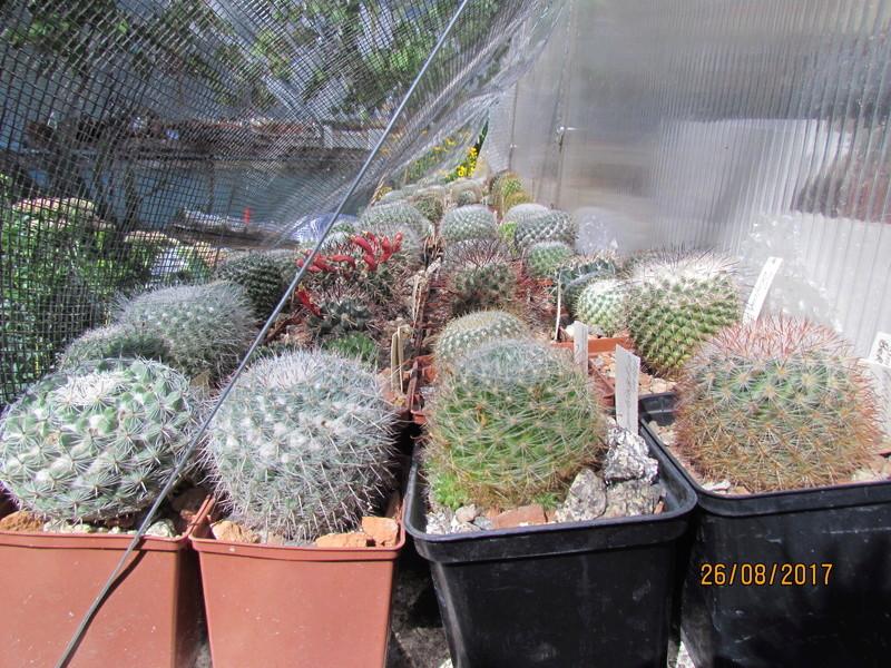 Cactus under carbonate 15 Img_7910
