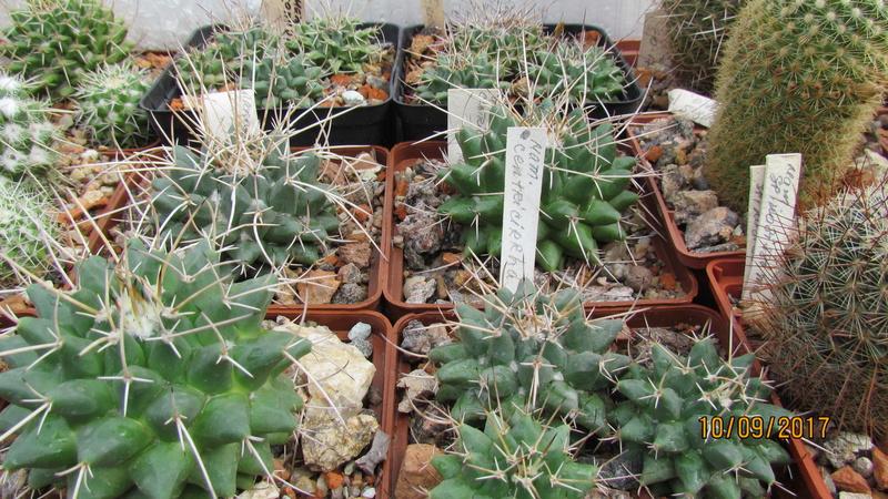 Cactus under carbonate 15 Img_8010