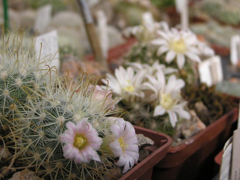 Cactus under carbonate 15 M_cowp10