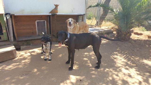 Canis Thor(Gedeeltelijke adoptie) 19897515