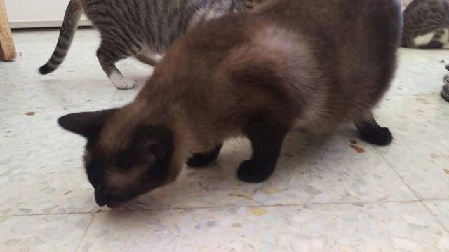 VF - Pany (kitten, doof en grotendeels blind) 20180410