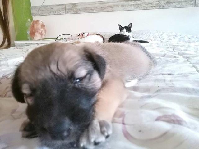 GEADOPTEERD   pup Tokyo met gebroken kaak. 21148410
