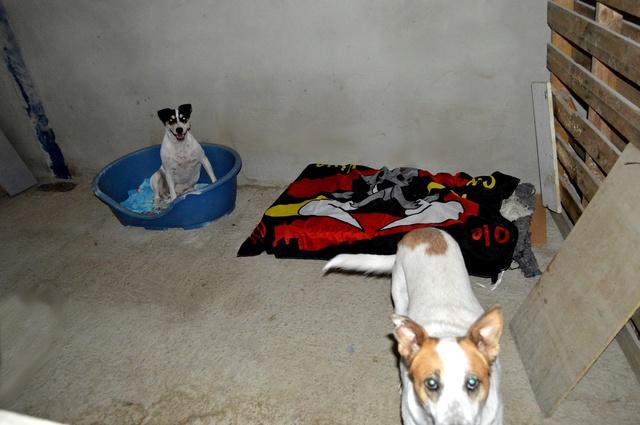 8 sept 2 pallets aangekomen bij Huellas con Esperanza 21744910