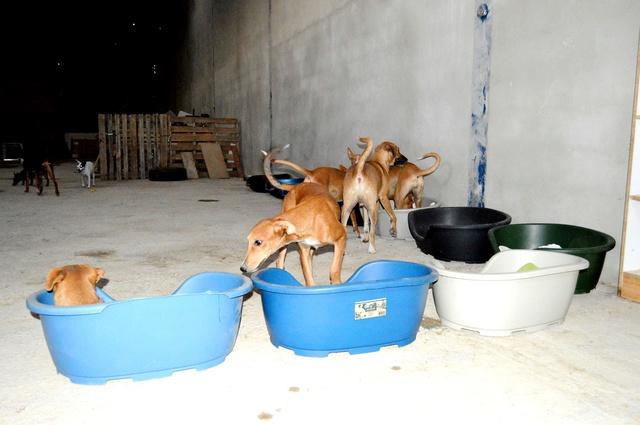 8 sept 2 pallets aangekomen bij Huellas con Esperanza 21745110