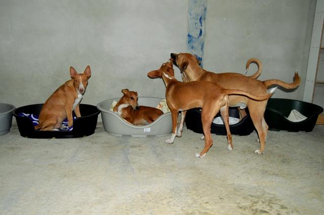 8 sept 2 pallets aangekomen bij Huellas con Esperanza 21745210