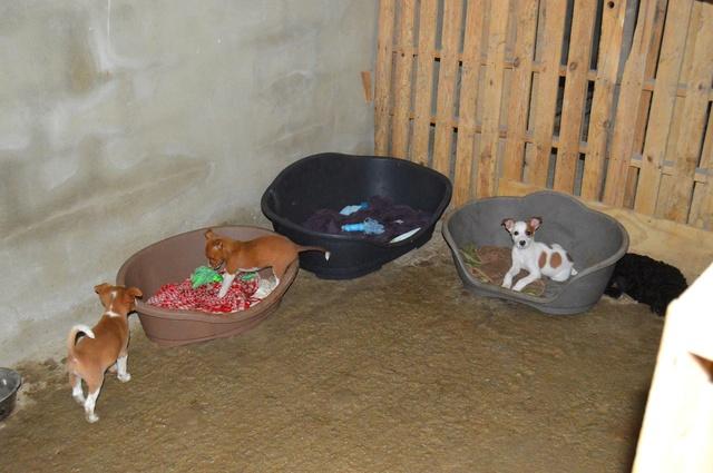 8 sept 2 pallets aangekomen bij Huellas con Esperanza 21764210