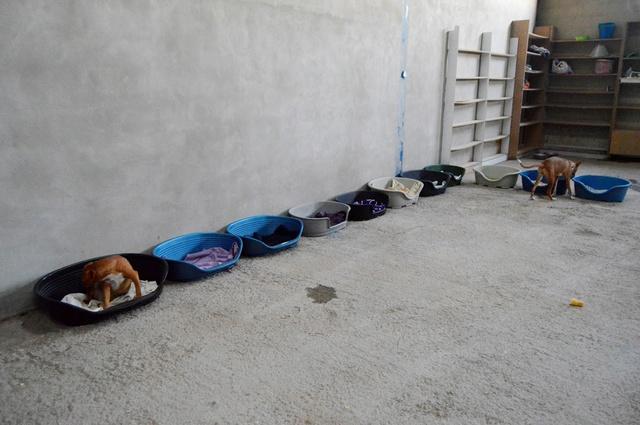 8 sept 2 pallets aangekomen bij Huellas con Esperanza 21769110