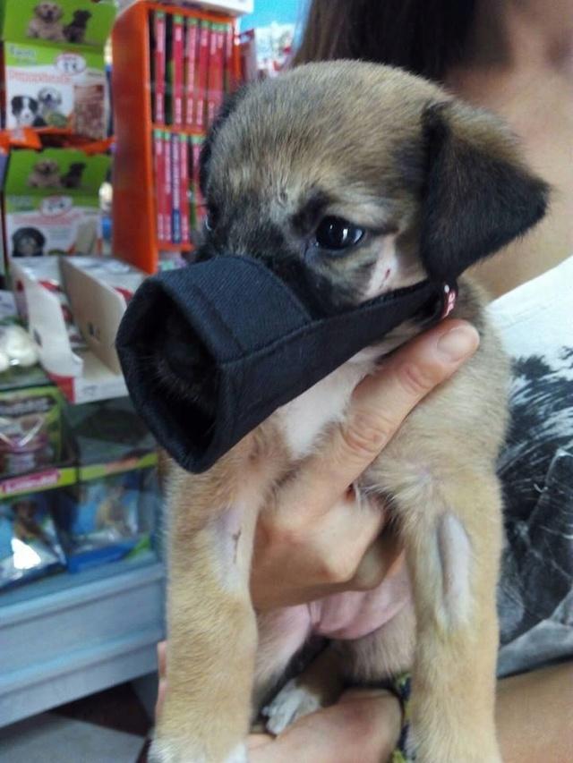GEADOPTEERD   pup Tokyo met gebroken kaak. 317