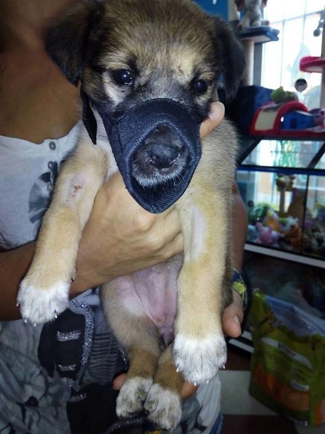 GEADOPTEERD   pup Tokyo met gebroken kaak. 515