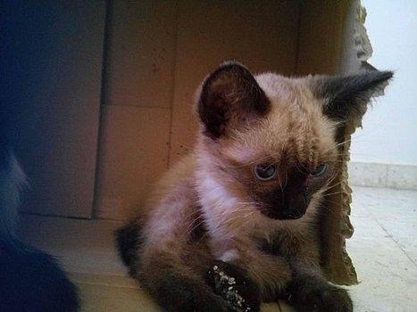 VF - Pany (kitten, doof en grotendeels blind) Csm_1316