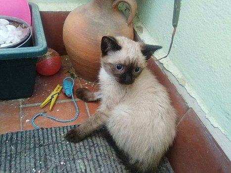 VF - Pany (kitten, doof en grotendeels blind) Csm_pa10