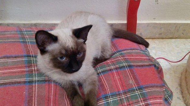 VF - Pany (kitten, doof en grotendeels blind) Csm_pa11