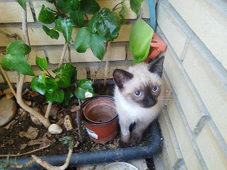 VF - Pany (kitten, doof en grotendeels blind) Csm_pa13