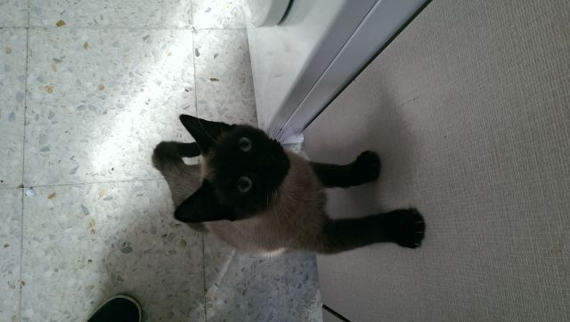 VF - Pany (kitten, doof en grotendeels blind) Pany_110