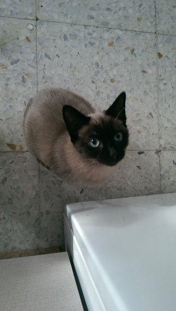 VF - Pany (kitten, doof en grotendeels blind) Pany_210