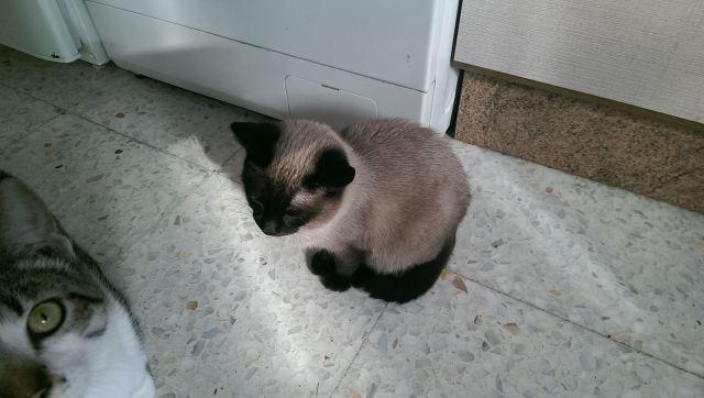 VF - Pany (kitten, doof en grotendeels blind) Pany_310