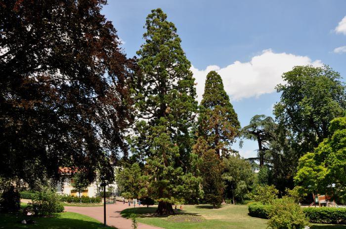 Auvergne Sequoi10