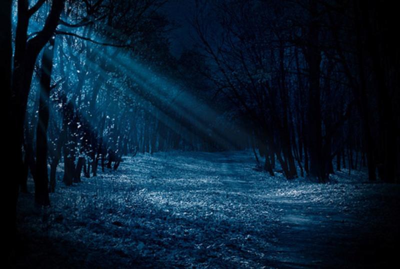 Résumé : L'Ombre de la Forêt : Partie I Clairi10