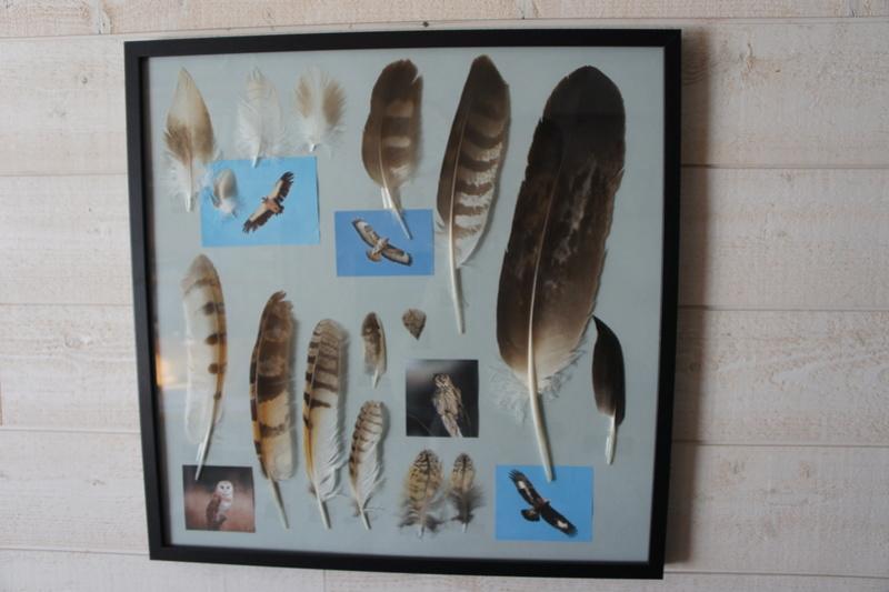 cadre plumes  Dsc01411