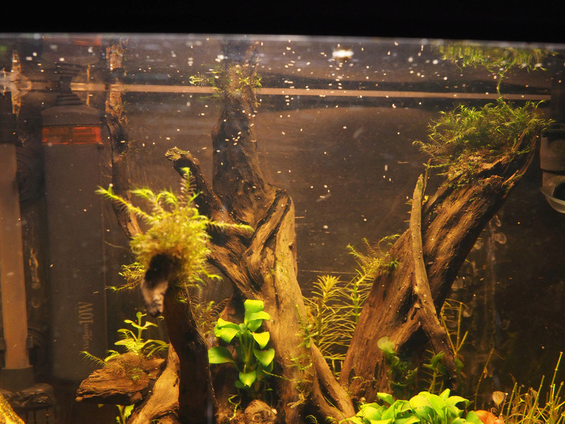 plantes jaunissent malgré engrais  P9290016