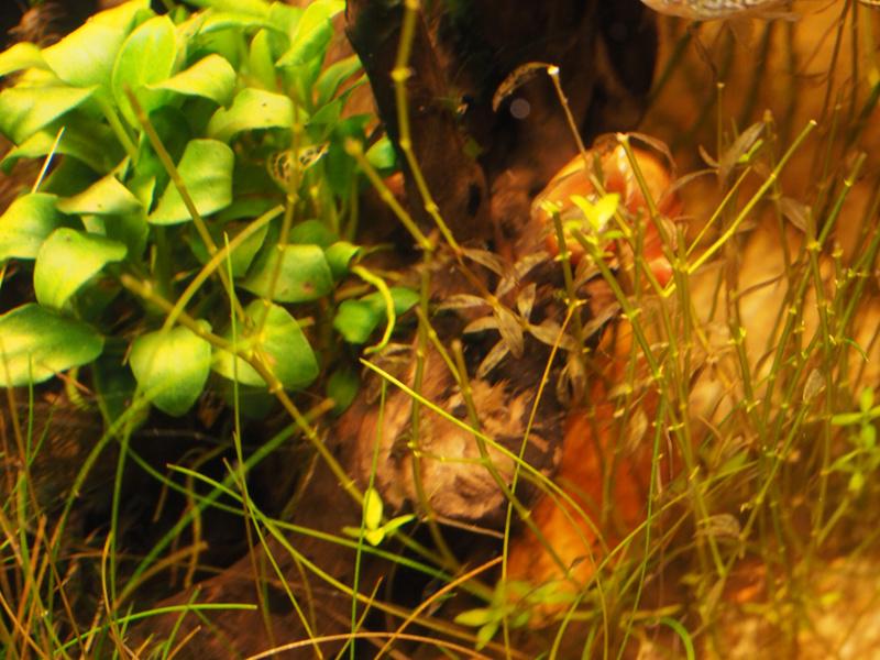 plantes jaunissent malgré engrais  P9290017