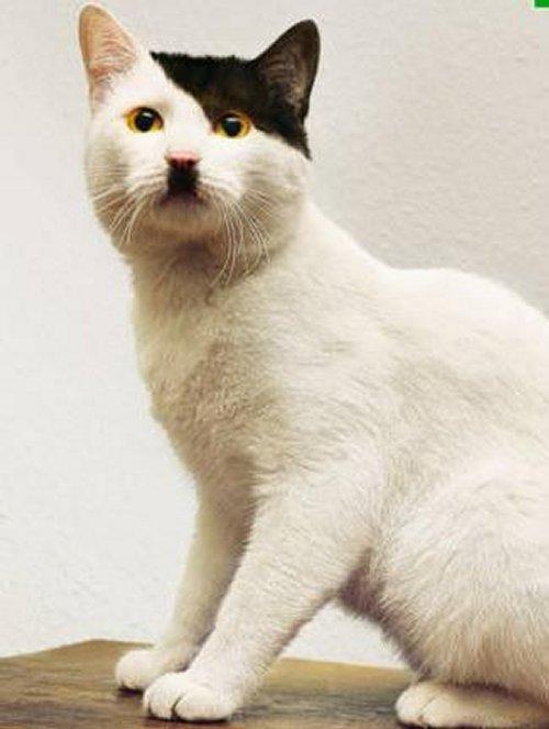 Les chats de l'AW Kitler10