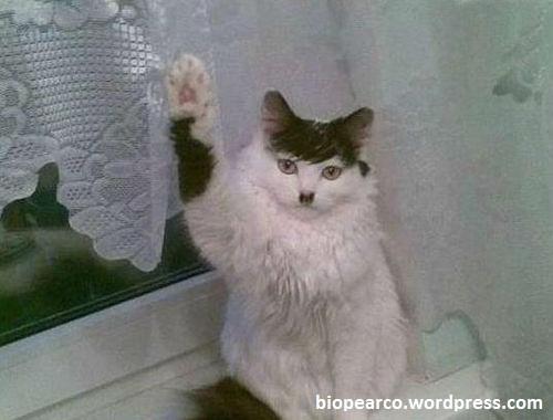 Les chats de l'AW Nazi-c10