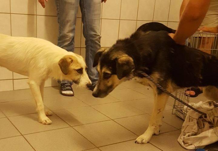 Arrivée du 5 août au refuge d'Ellen (Allemagne) au départ de Roumanie Falko_10