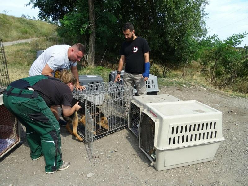 Transfert de 12 + 3 chiens de la fourrière de Piatra Neamt vers Bucarest pour le refuge d'Ellen Img-2059
