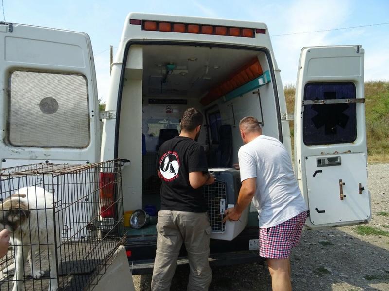 Transfert de 12 + 3 chiens de la fourrière de Piatra Neamt vers Bucarest pour le refuge d'Ellen Img-2060
