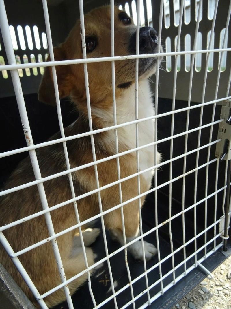 Transfert de 12 + 3 chiens de la fourrière de Piatra Neamt vers Bucarest pour le refuge d'Ellen Img-2061