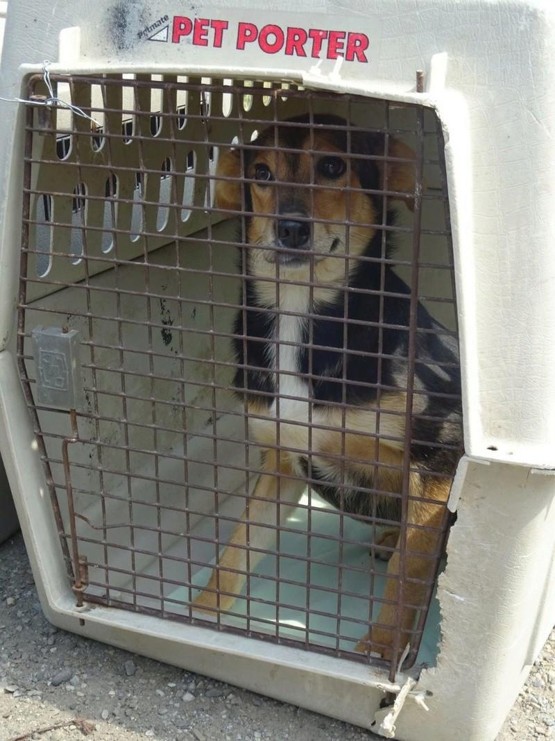 Transfert de 12 + 3 chiens de la fourrière de Piatra Neamt vers Bucarest pour le refuge d'Ellen Img-2062